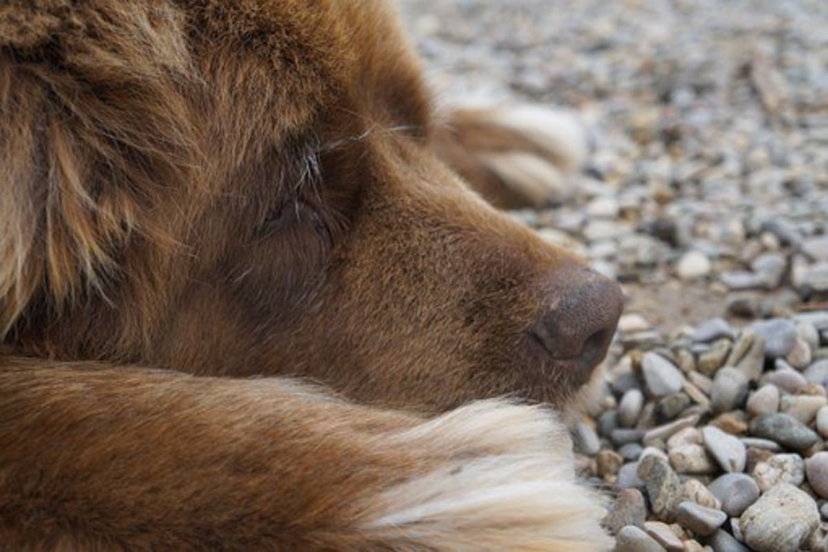 15 Great Water Names for Your Newfoundland Dog