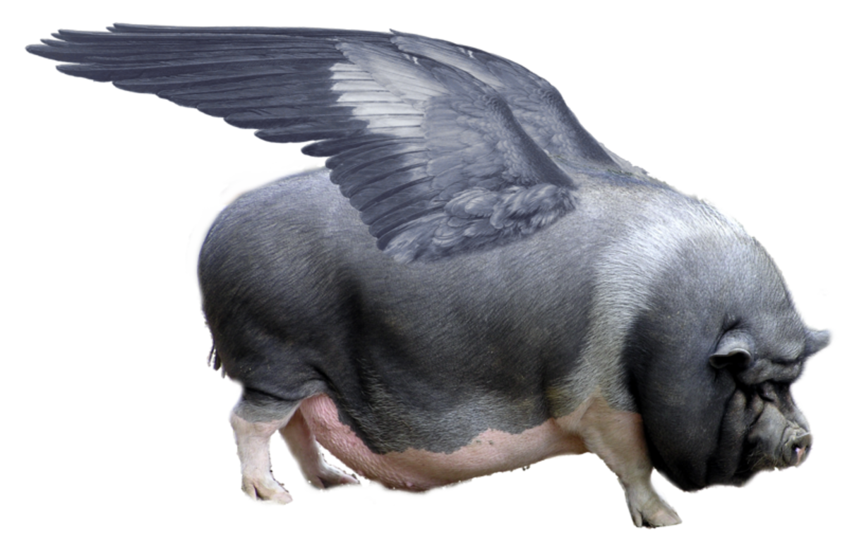 when-the-pigs-begin-to-fly