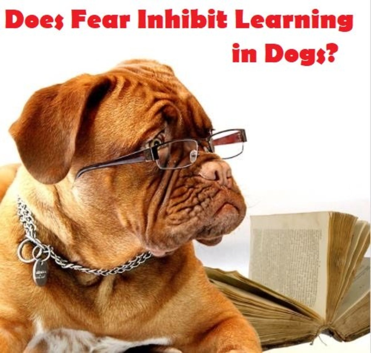 Does Fear Inhibit Learning in Dogs?