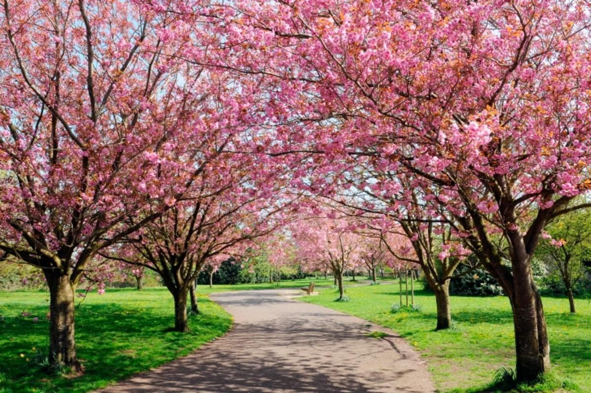Rebirth of Life: Spring Arrives