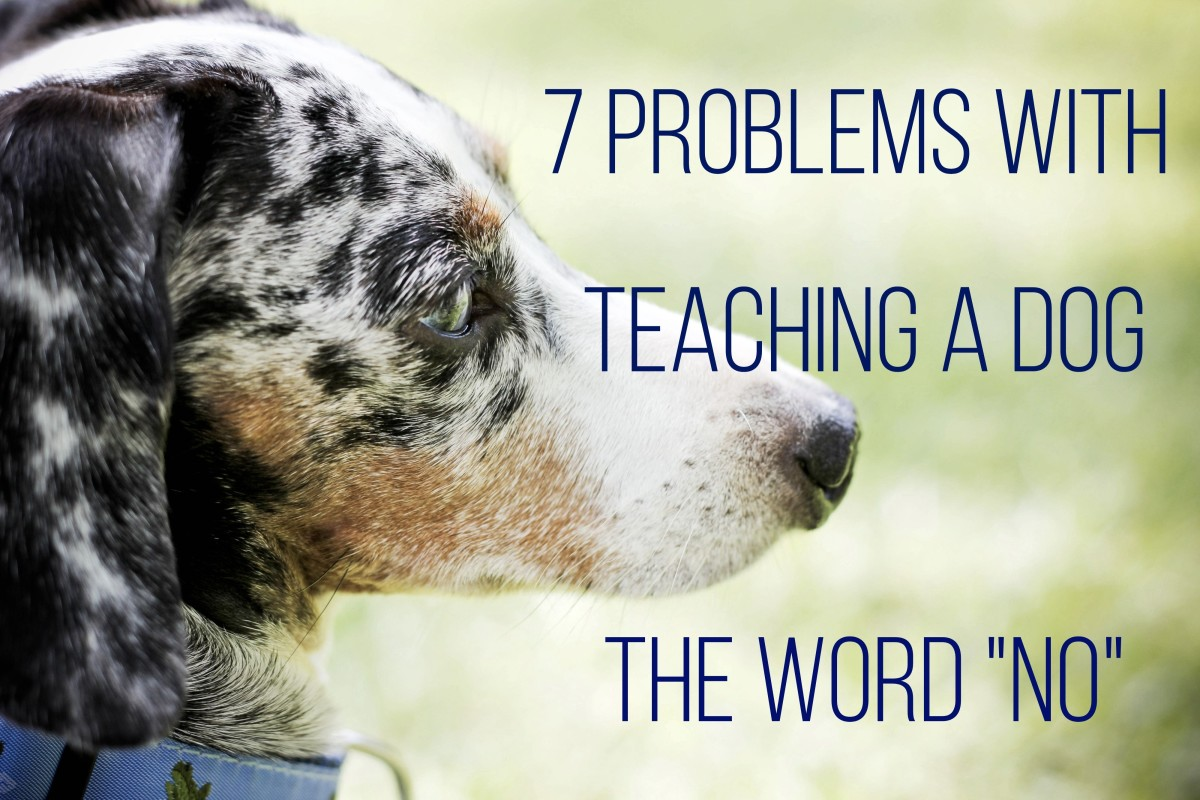 We use words to communicate with our dogs without evaluating whether or not the words can be understood.