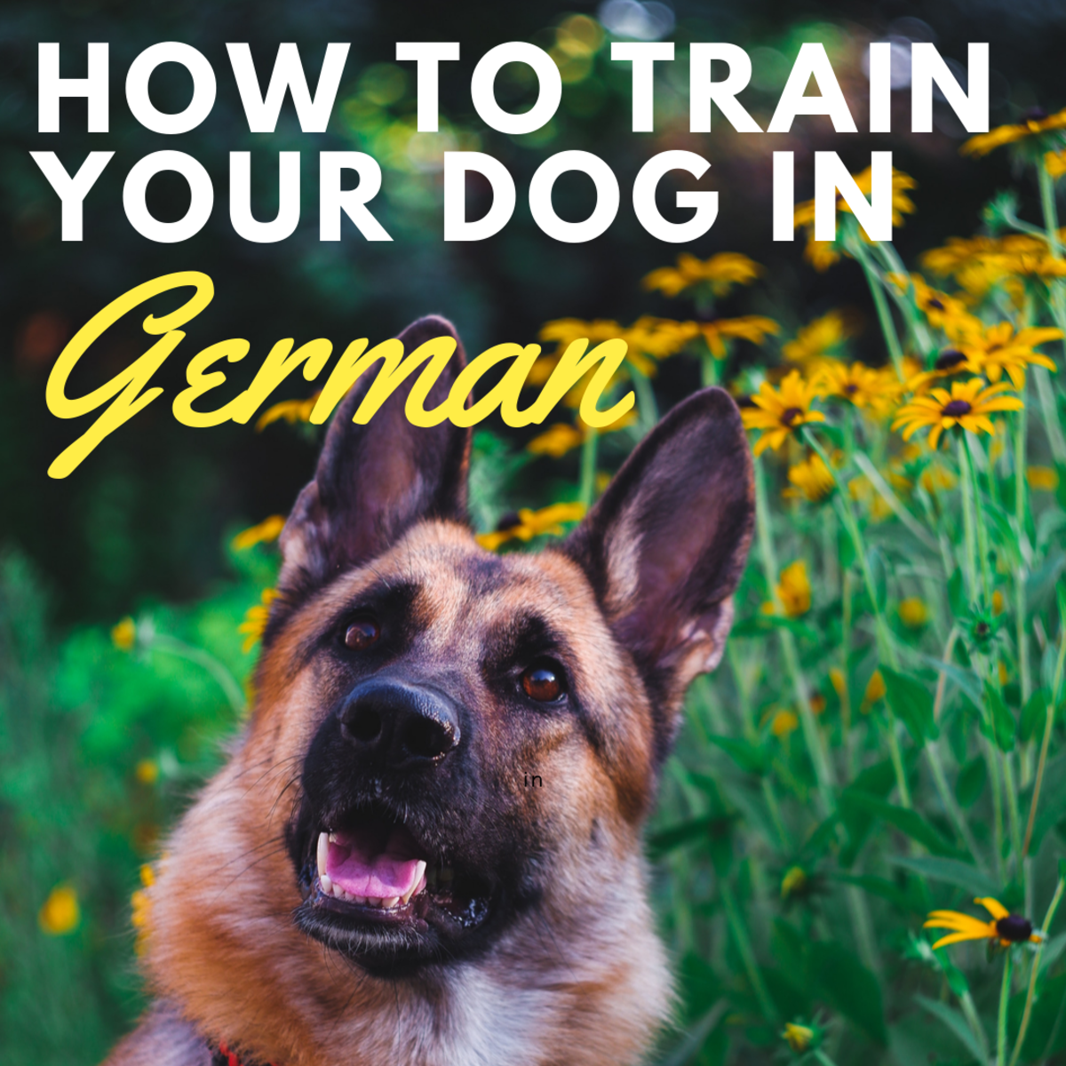 How to Teach Your Dog Cues in German