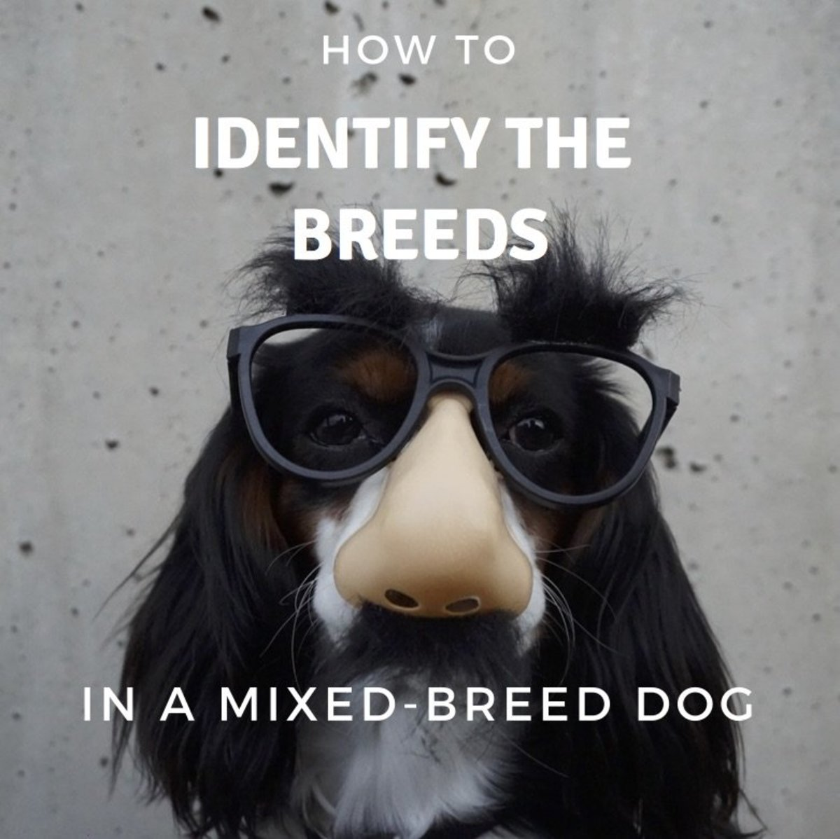 How to Identify the Breeds in a Mixed-Breed Dog | PetHelpful