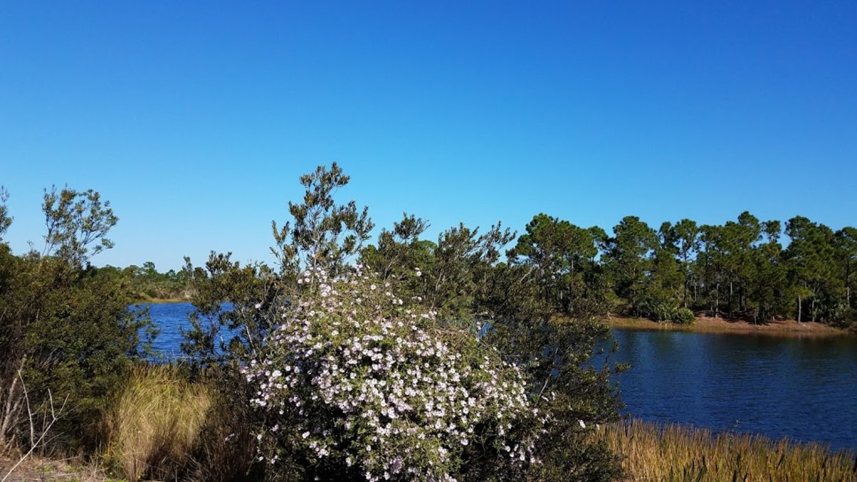 Indrio Savannah Park, Fort Pierce, Florida