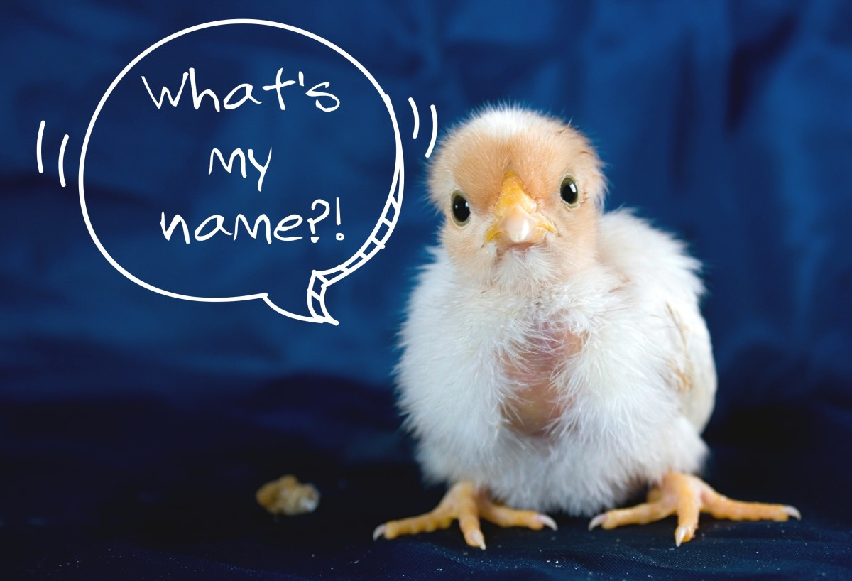 List of awesome chicken names
