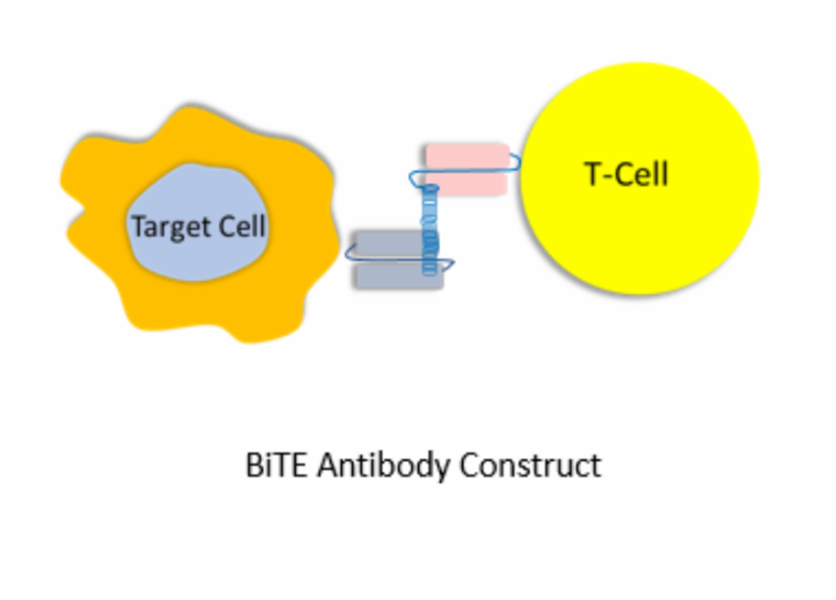 Mechanism of action of bispecific antibodies