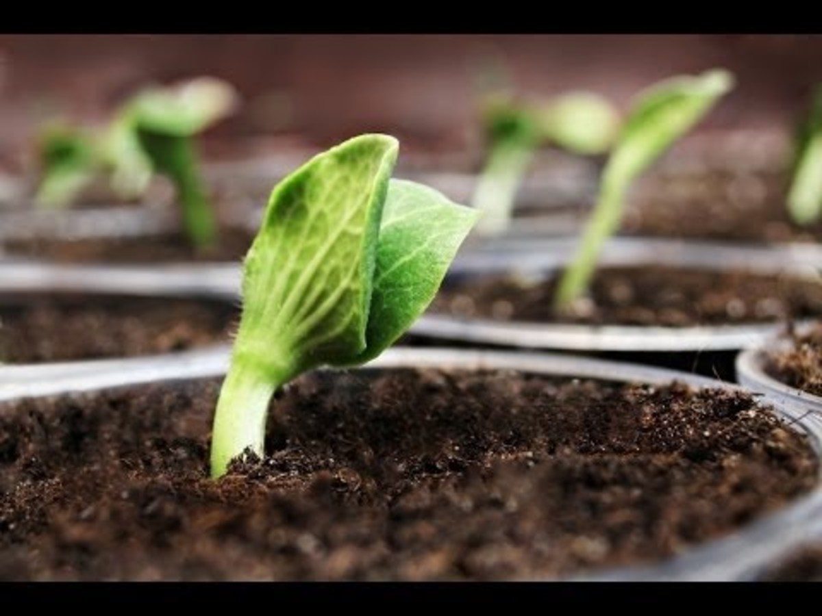 The Birth of a Seed