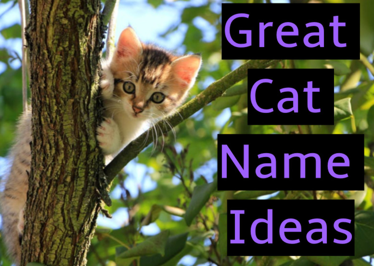 Several ideas for naming your cat or kitten.
