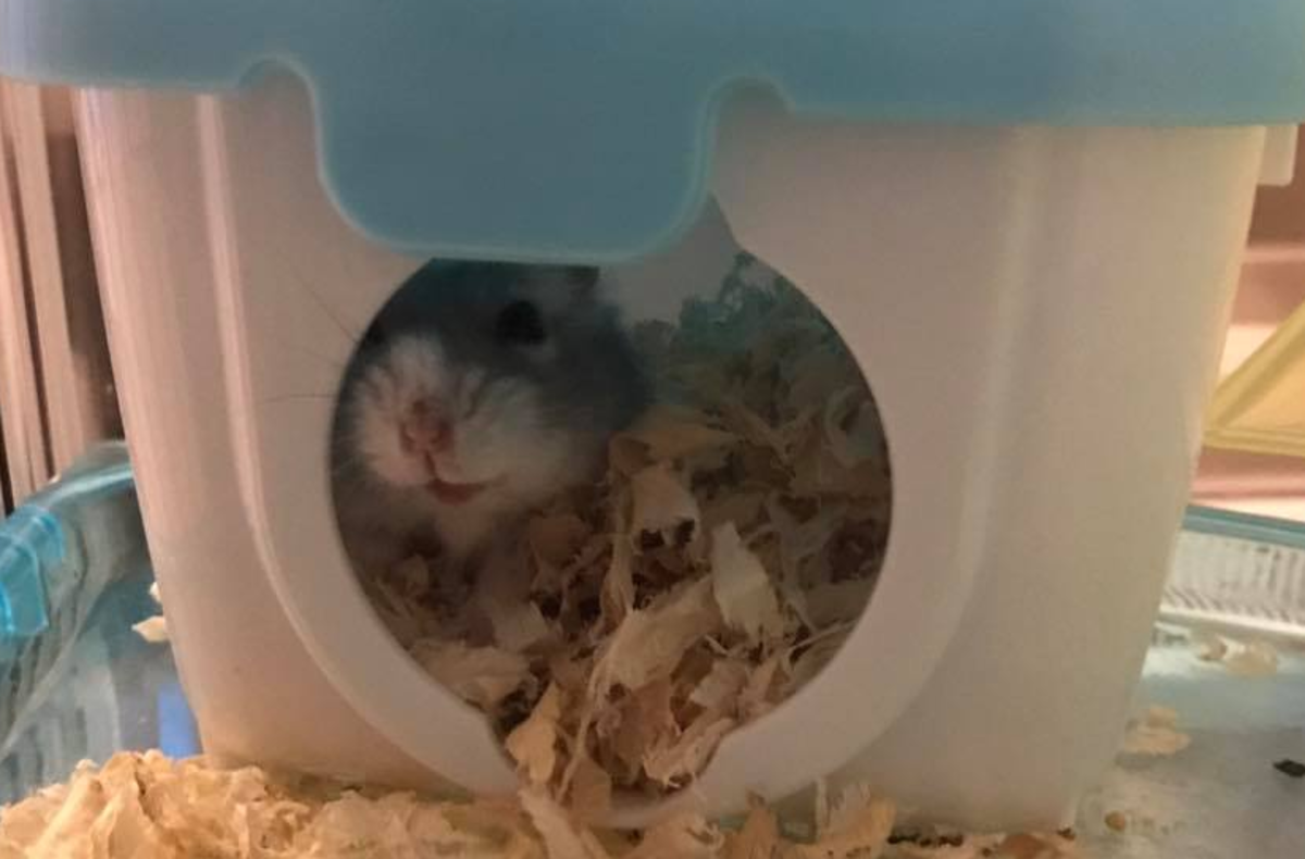 How Can I Get My Hamster to Trust Me?