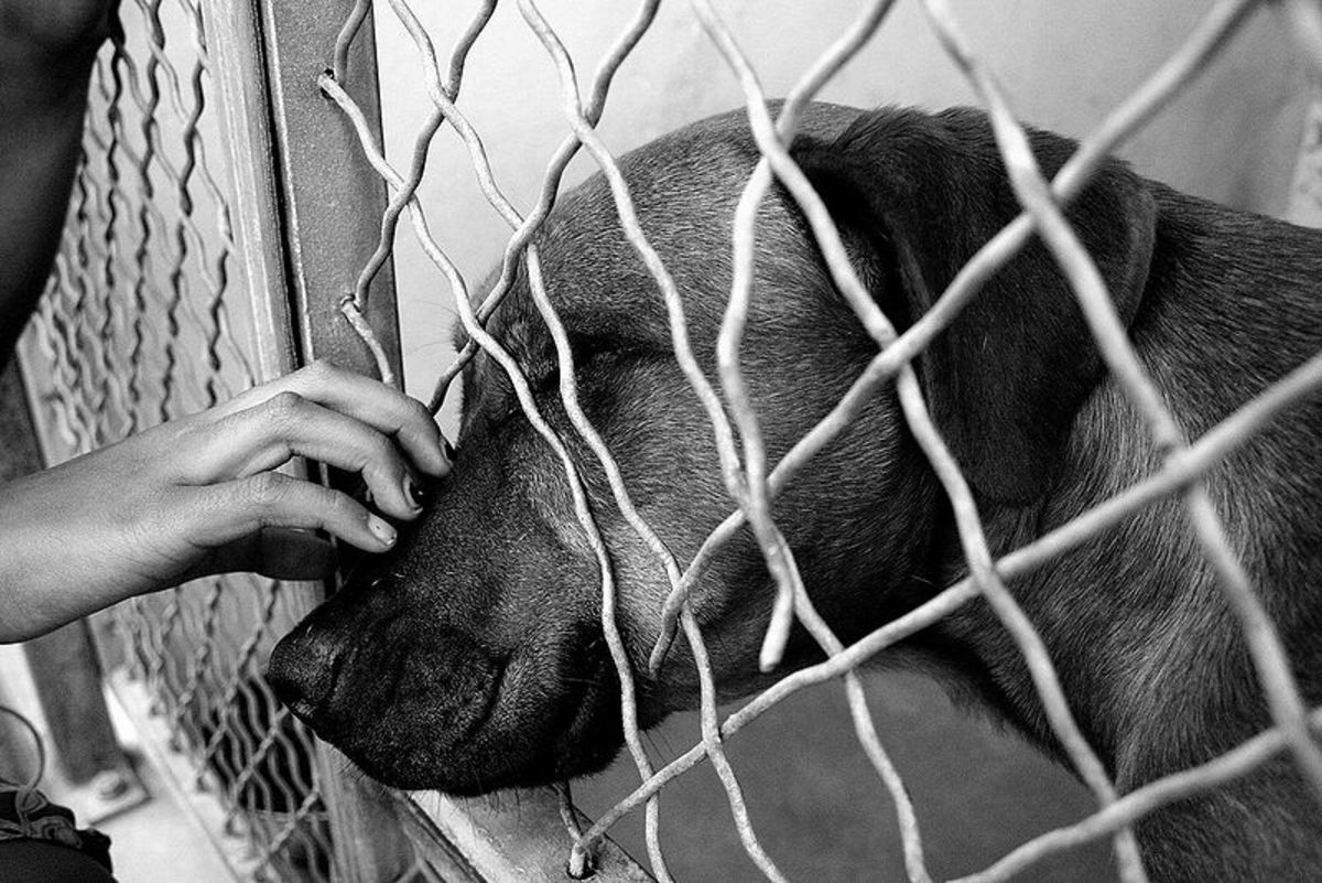 The Complete Guide to Adopting Your First Shelter Dog