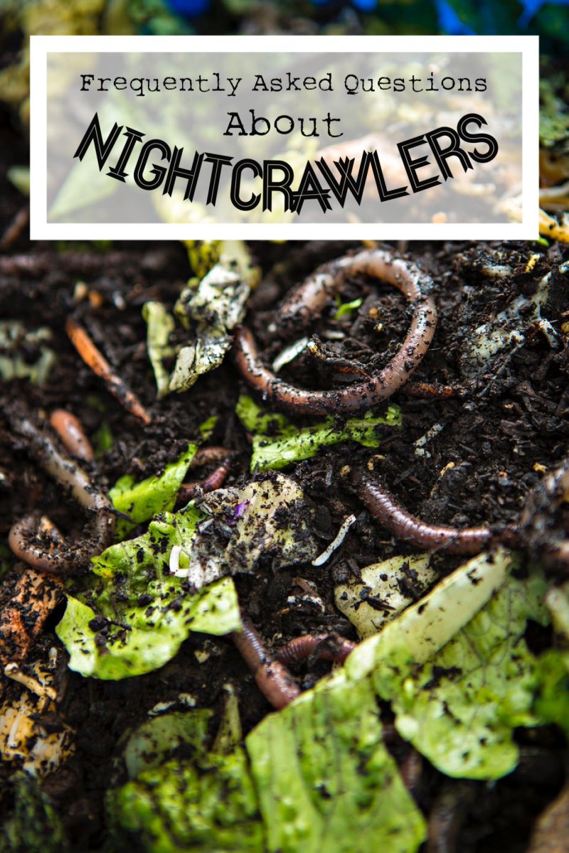 Frequently Asked Questions About Nightcrawlers