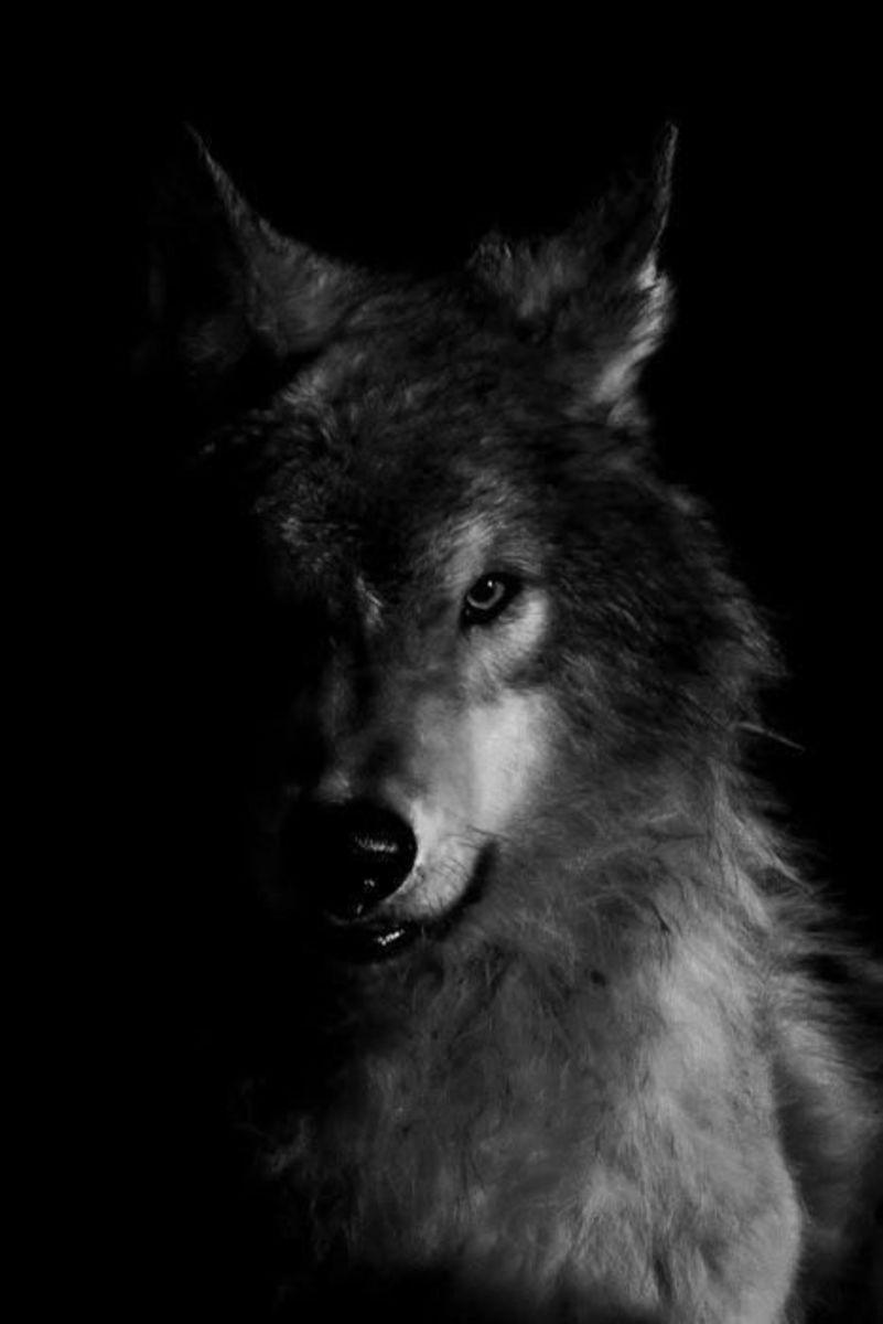 ...Mean Dog...