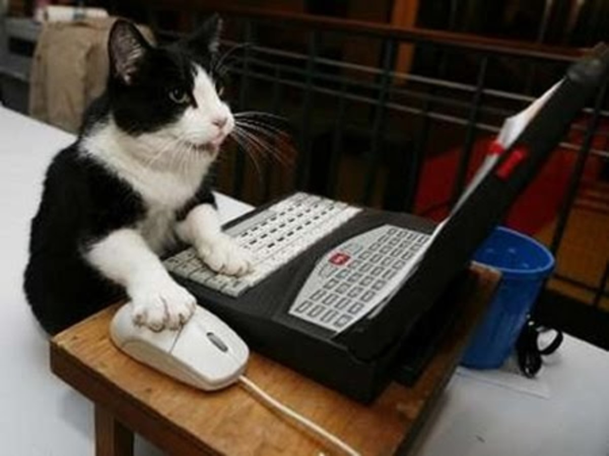 Even this cat can acquire passive income!