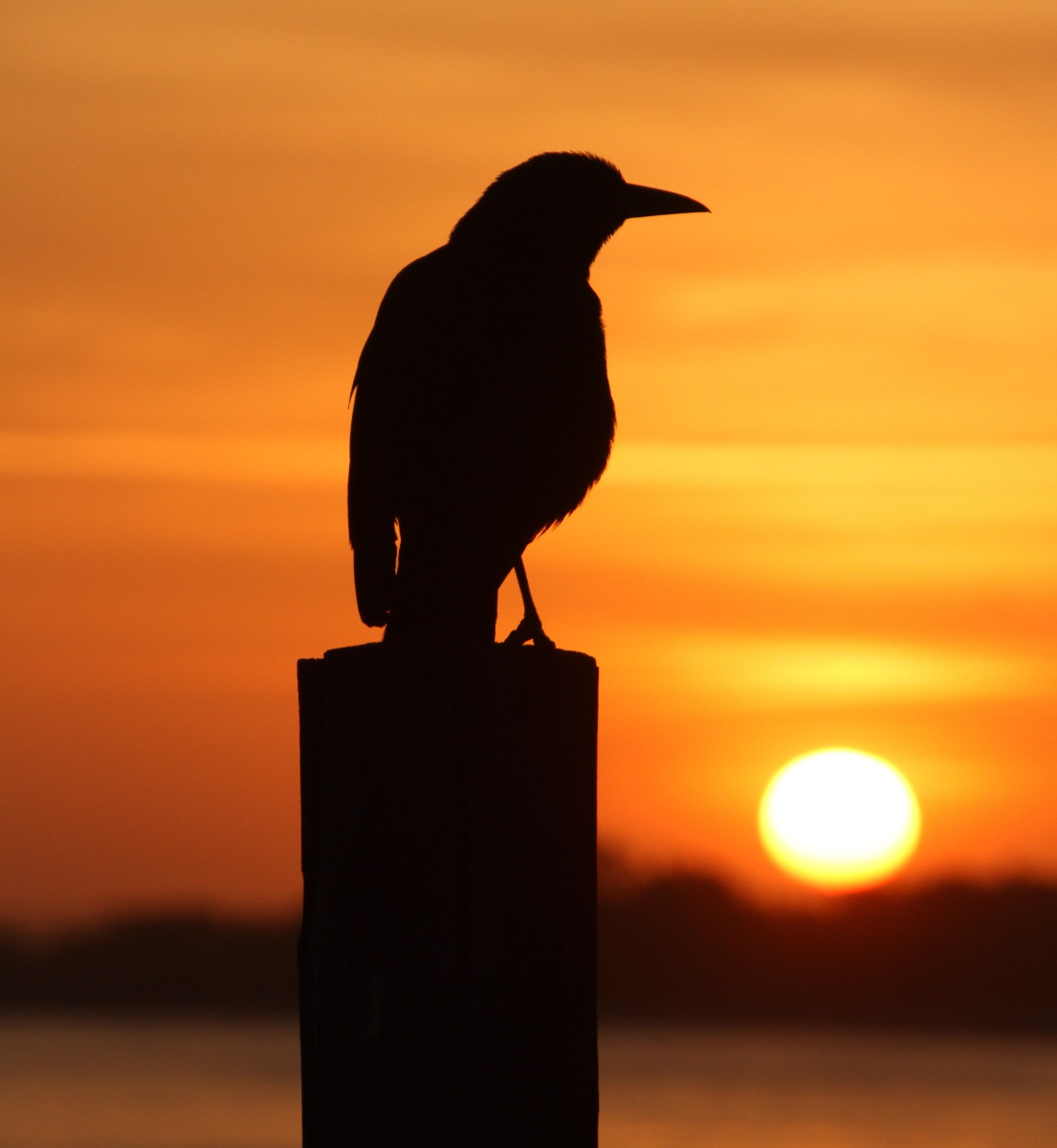 13 Bible Verses About Birds with Explanations and Other Religions