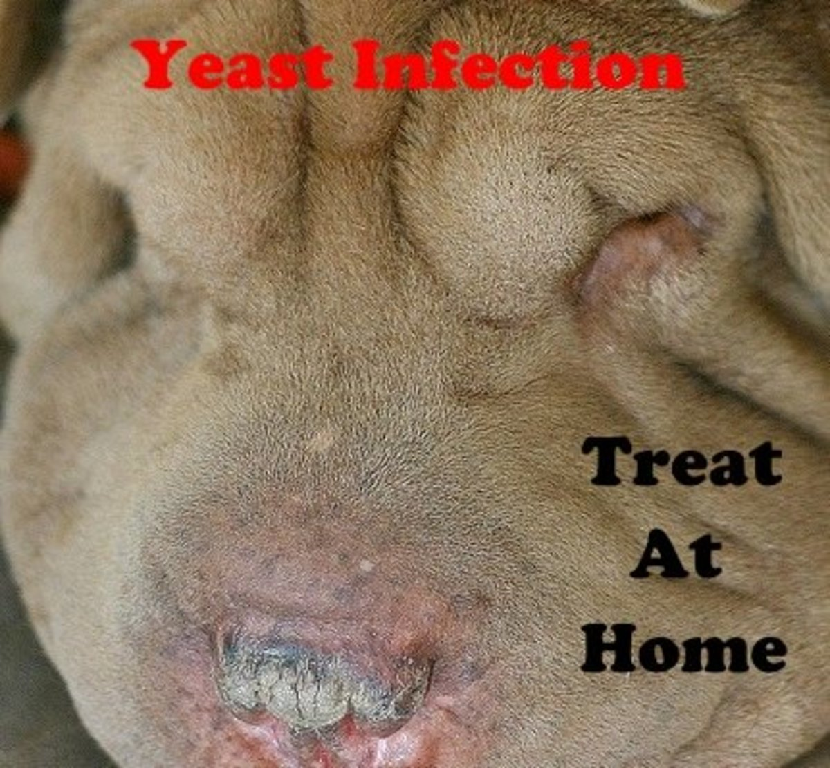 A yeast infection can be treated at home without going to the vet.