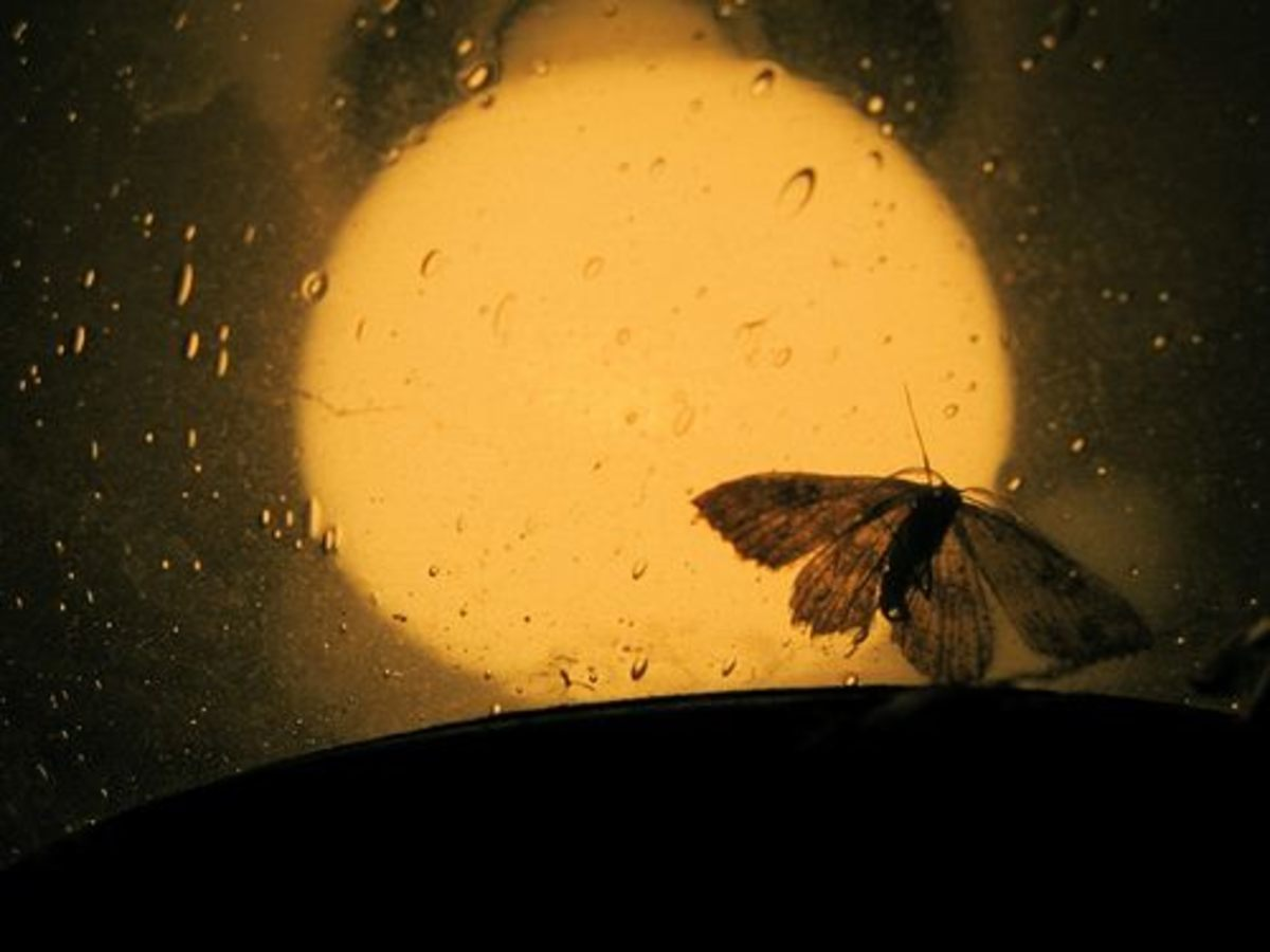 Moth with Flame