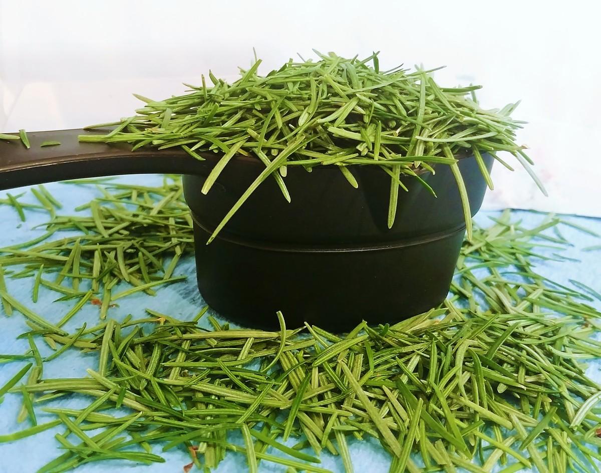 Winter Wild Edibles: How to Make Pine Needle Tea