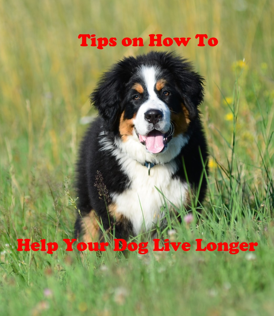 7 Easy Tips to Increase Your Dog's Lifespan