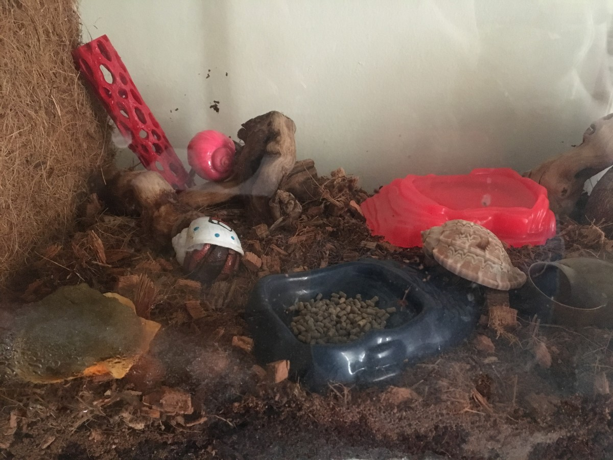 Hermit Crab Care Basics