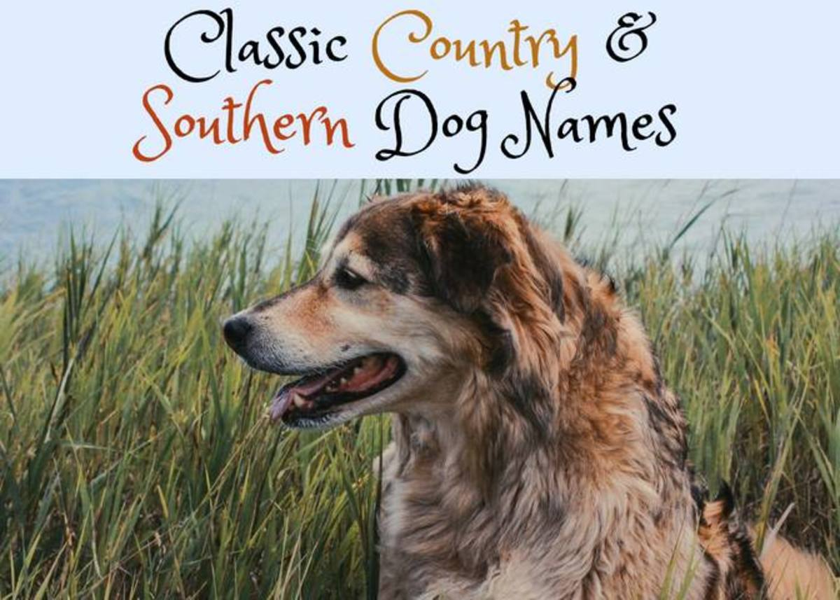 Southern and country dog names