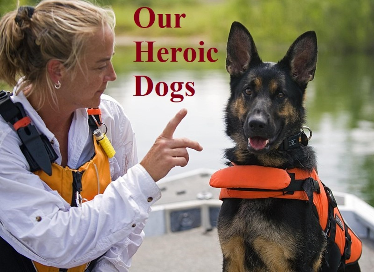 Our heroic search-and-rescue dogs need specialist training
