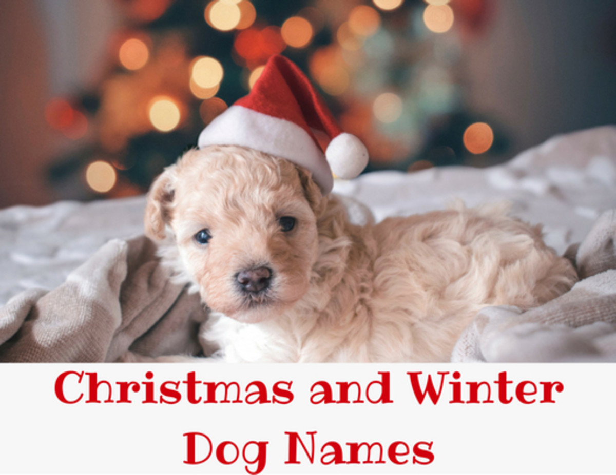 200+ Christmas and Winter Names for Dogs