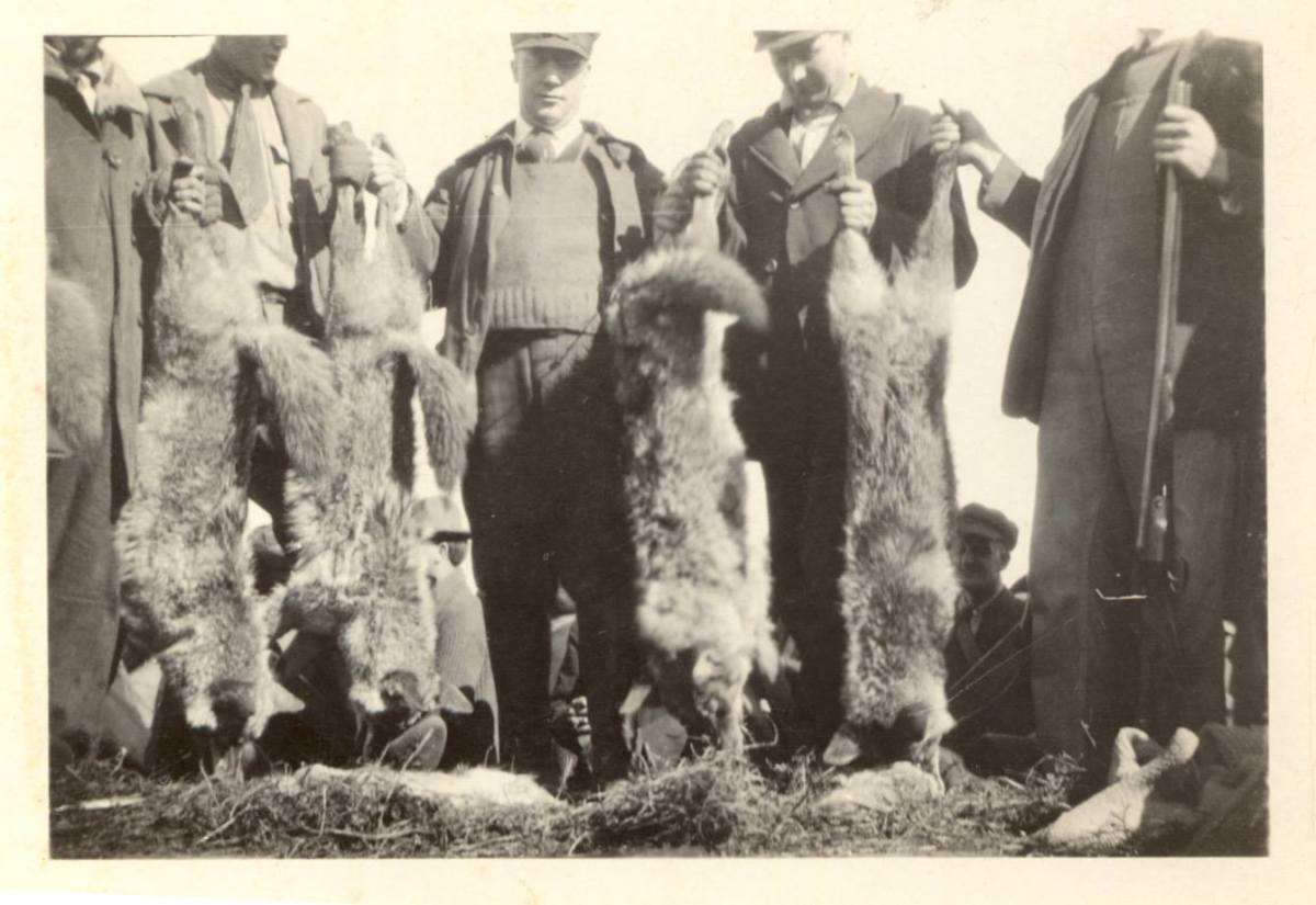 The results from one wolf hunt (used with permission of W. Brevitt).