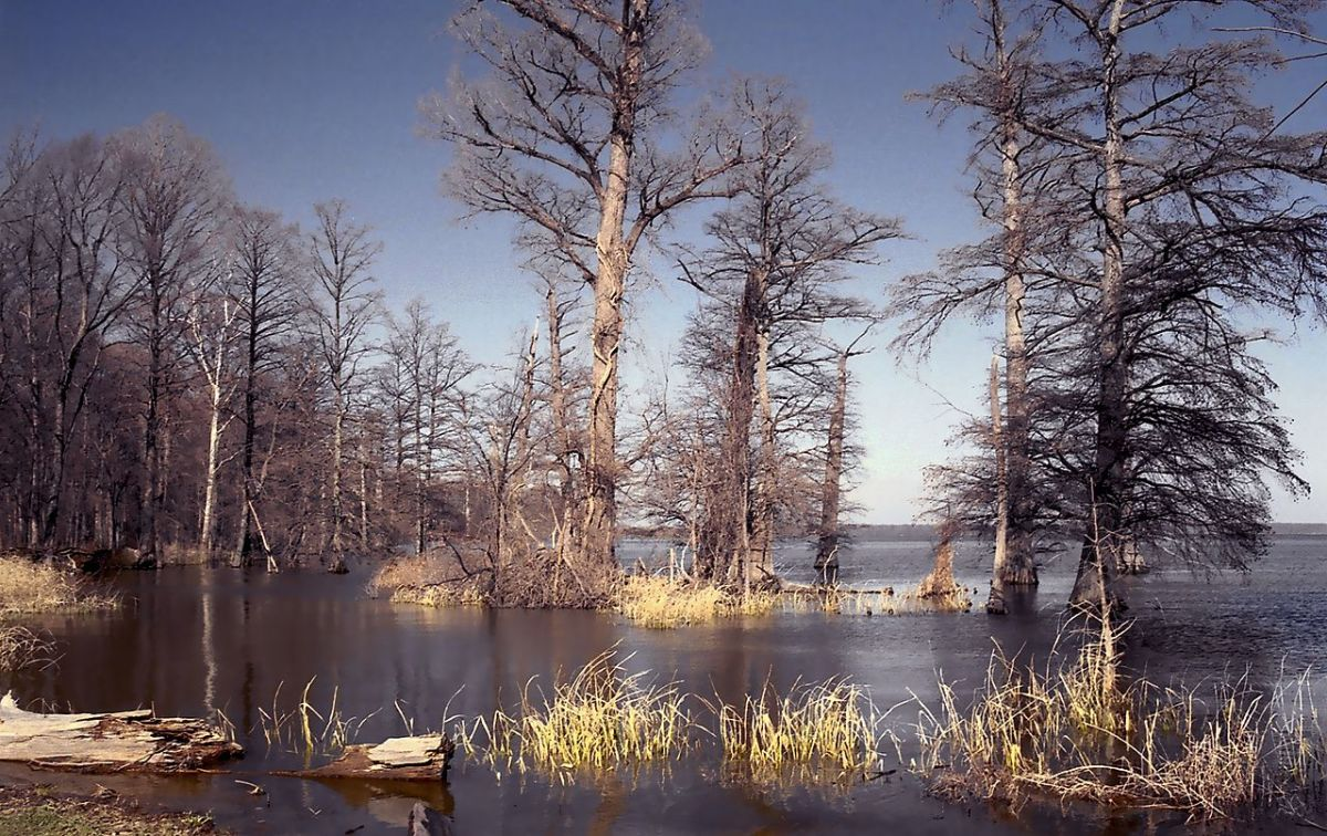 Reelfoot Lake, created by the New Madrid Earthquakes of 1811-1812