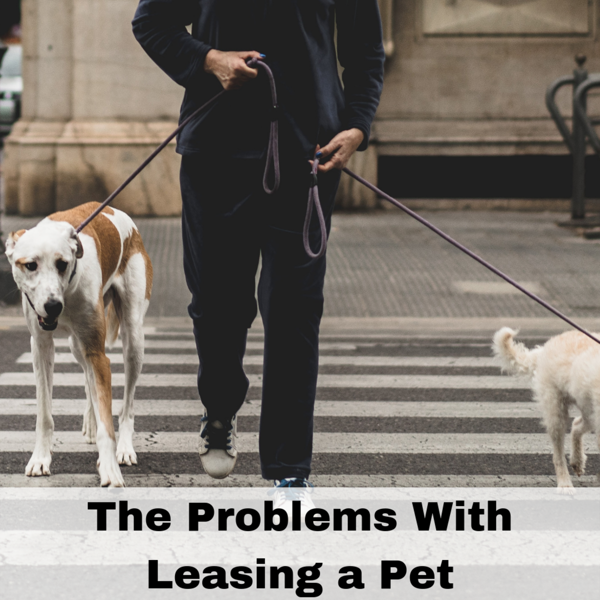 Be wary about pet leasing, you have to be careful about who you want to trust as a leaser or a lessee.