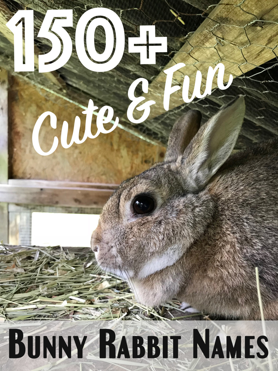Cute and fun name ideas for pet bunnies.
