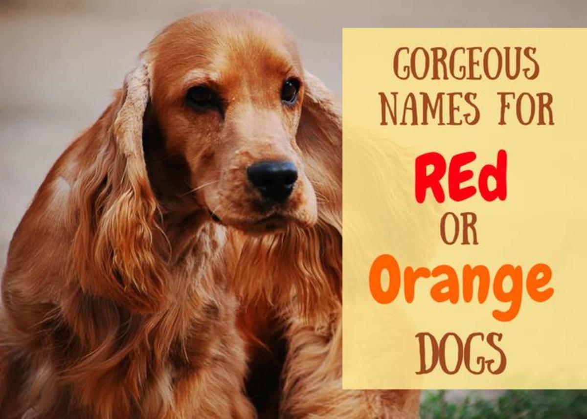 200+ Unique Red and Orange Dog Names