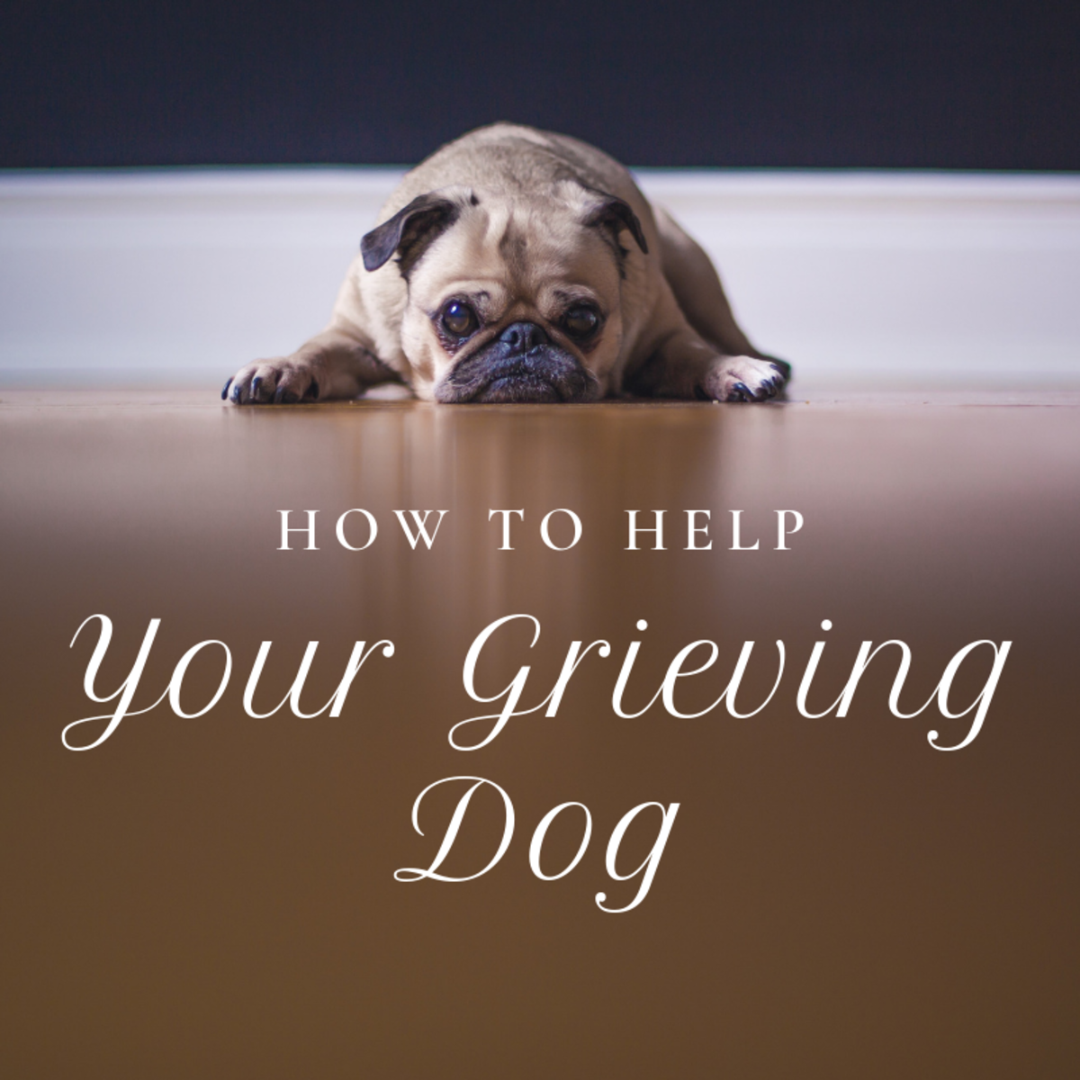 How to Help a Dog That Is Grieving the Loss of Another Dog