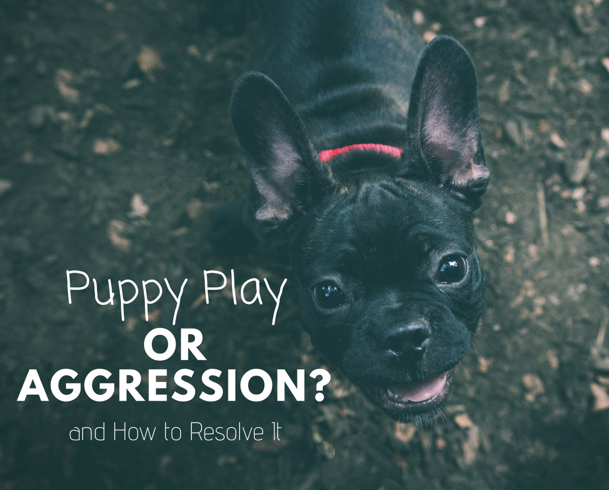 Puppy play or aggression? Learn how to read your dog's behavior.