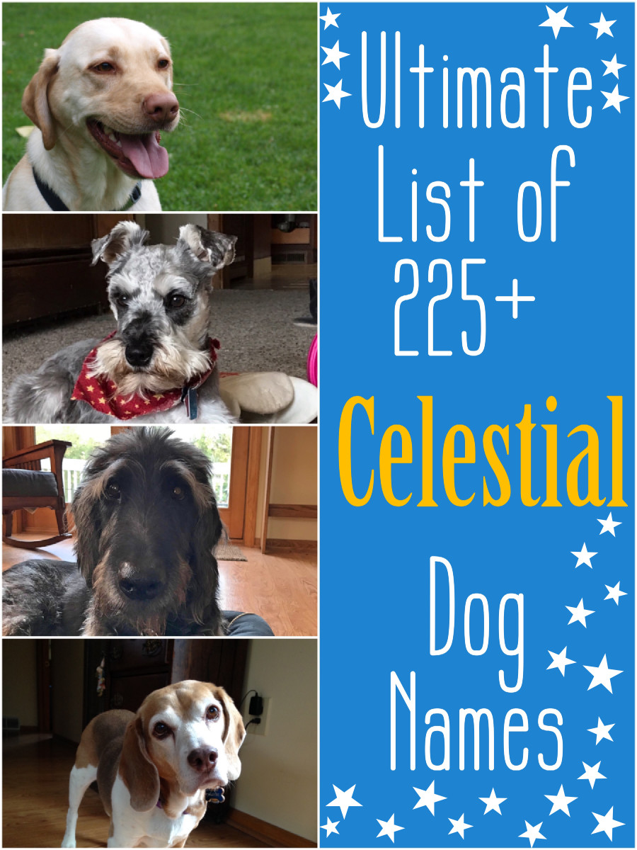 The Ultimate List of 225+ Celestial Dog Names
