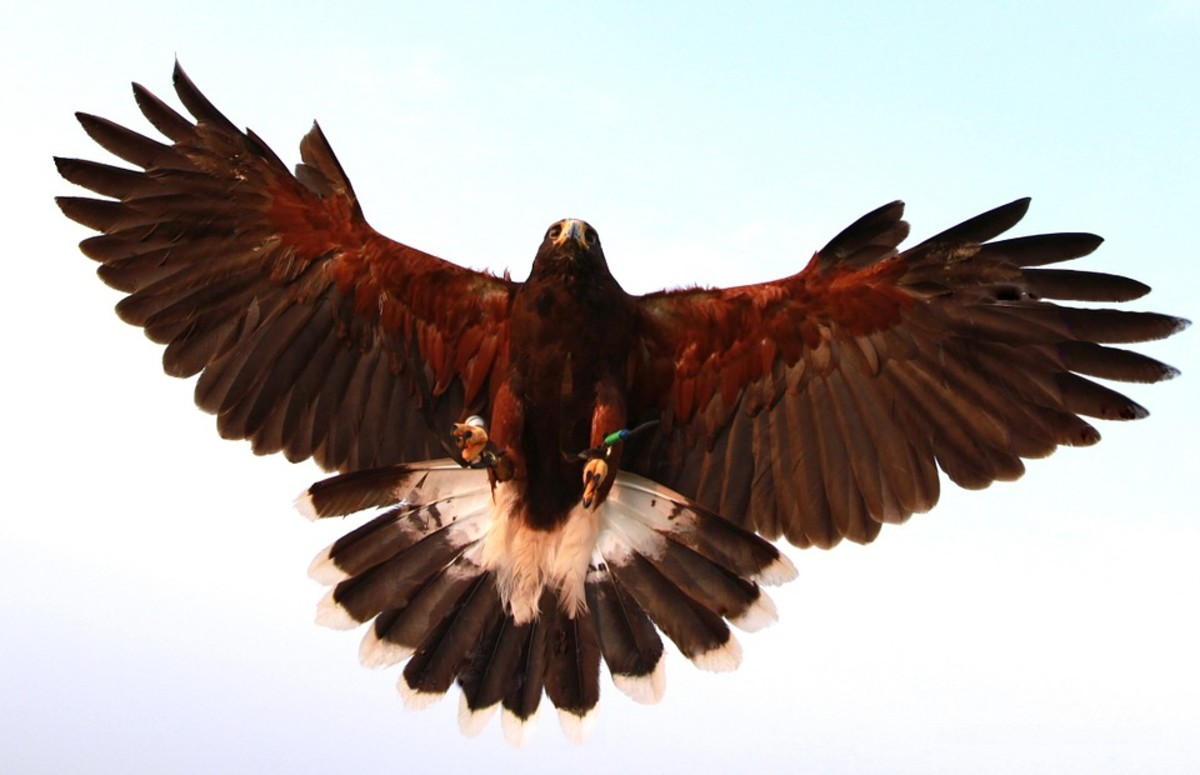 The ability to be one with nature while soaring through it was a challenge.