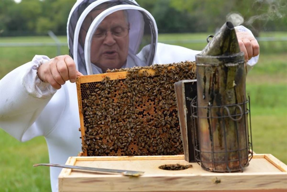 What Do Beekeepers Do in Spring