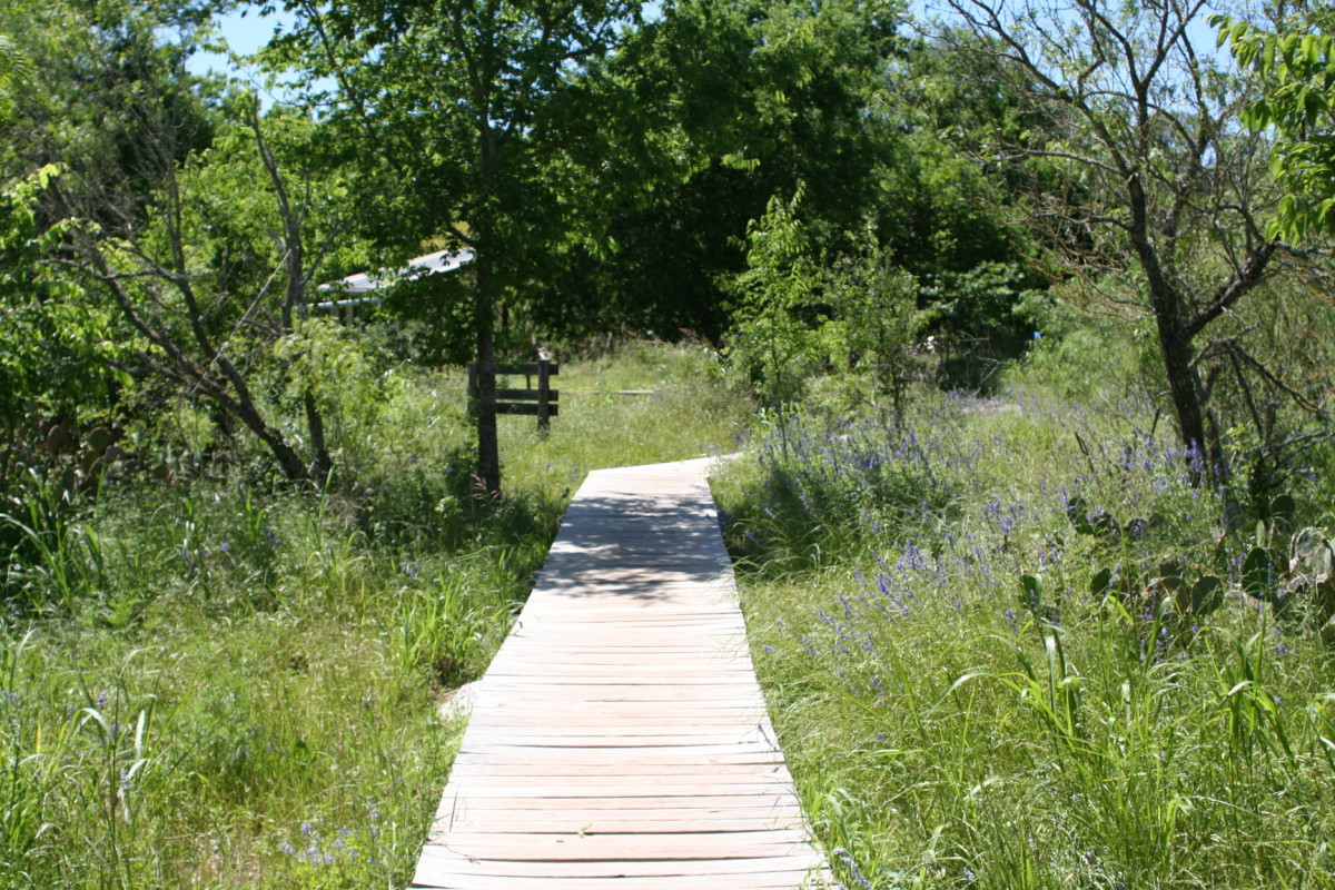 Top 5 Hiking Trails in San Marcos, Texas