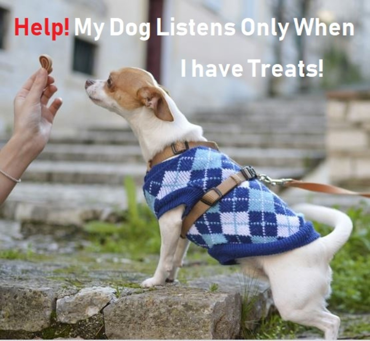 Help! My Dog Only Listens to Me When I Have Treats