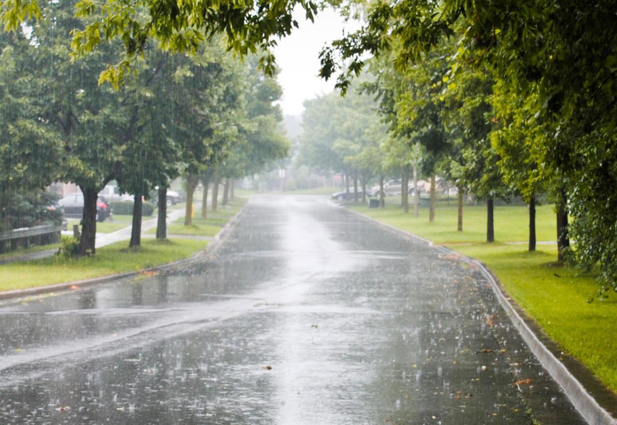 Enjoying the benefits of a nice rainy day.