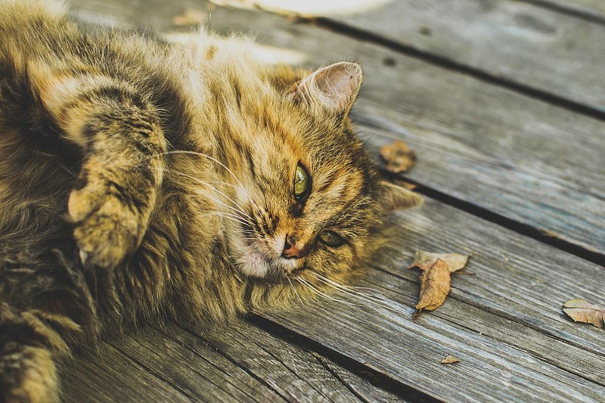 Why Does My Cat Cough?