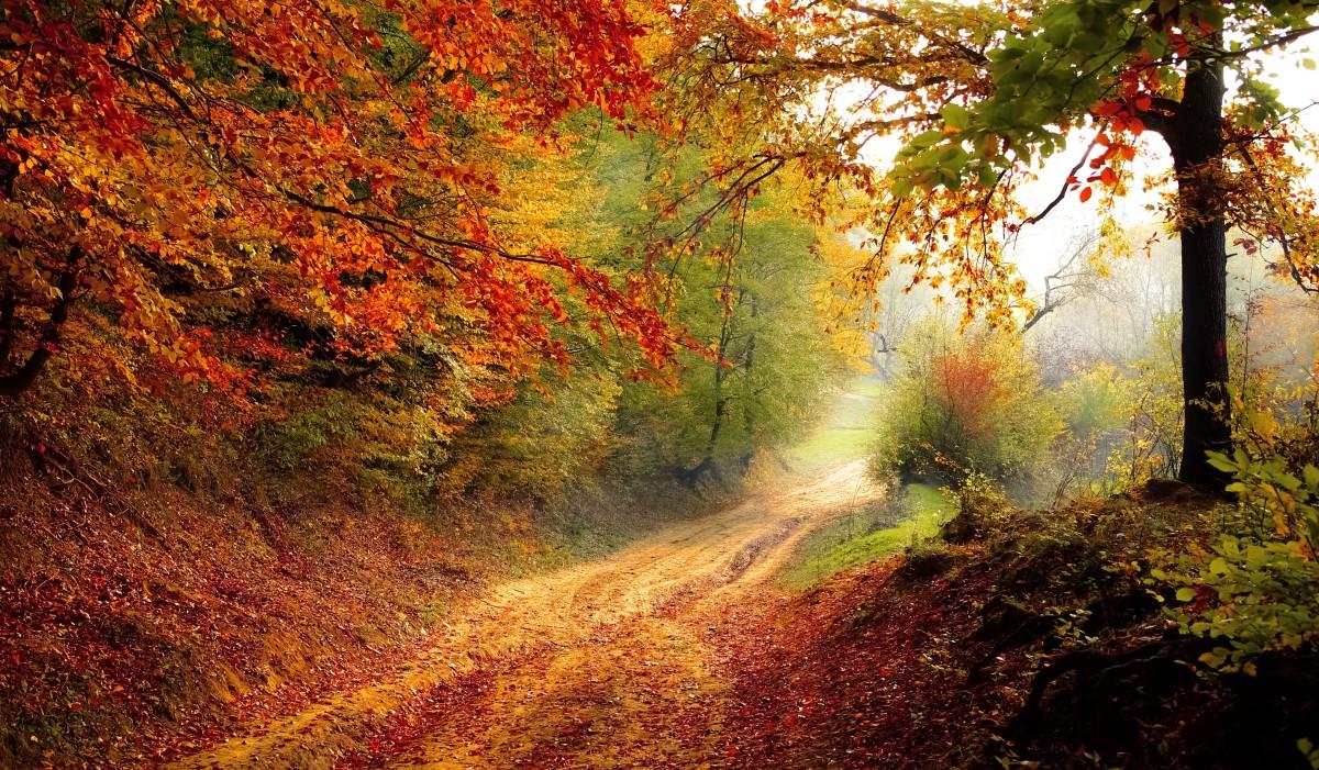 Evening Fall