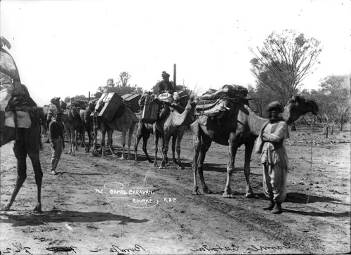When the camel was king, carrying freight with their Afghan herders.