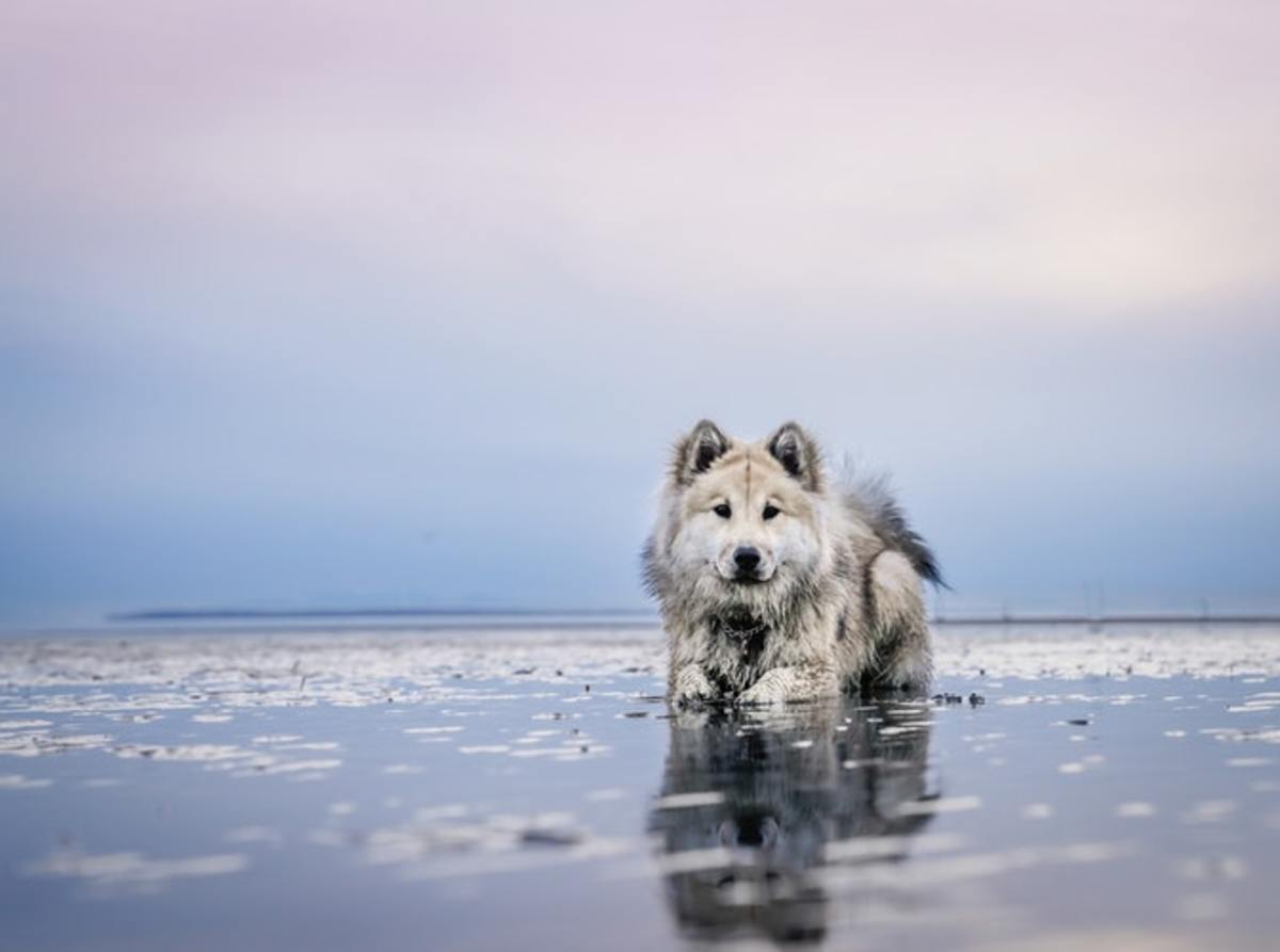 Tips to Keep Your Dog Safe at the Beach