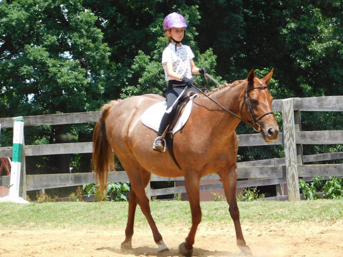 This student looks very nicely dressed for a lesson. She is a good example rider!