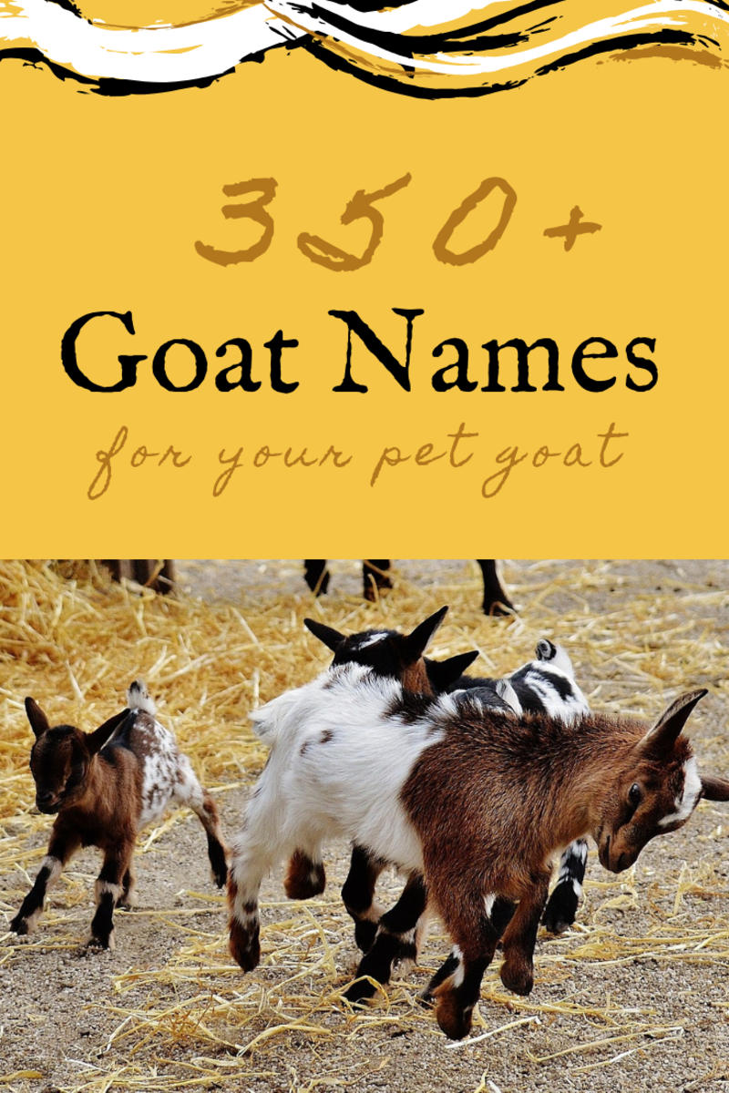 350+ Pet Goat Names for Your New Goat