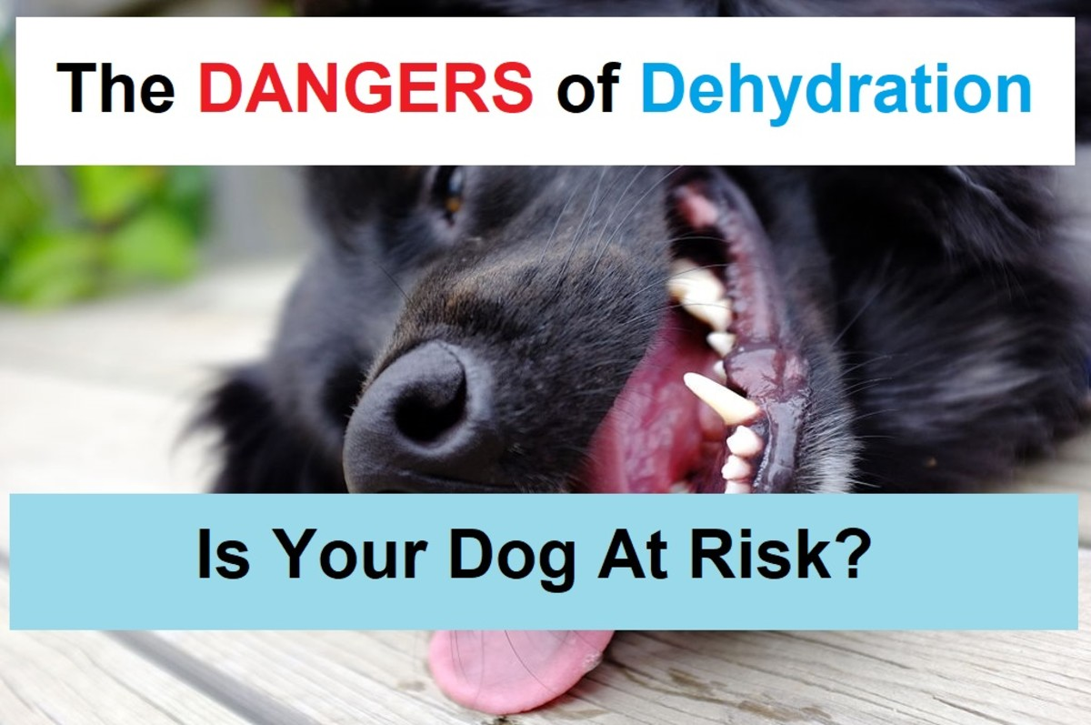 If a dog becomes dehydrated, he is at risk of long-term injury or even death.