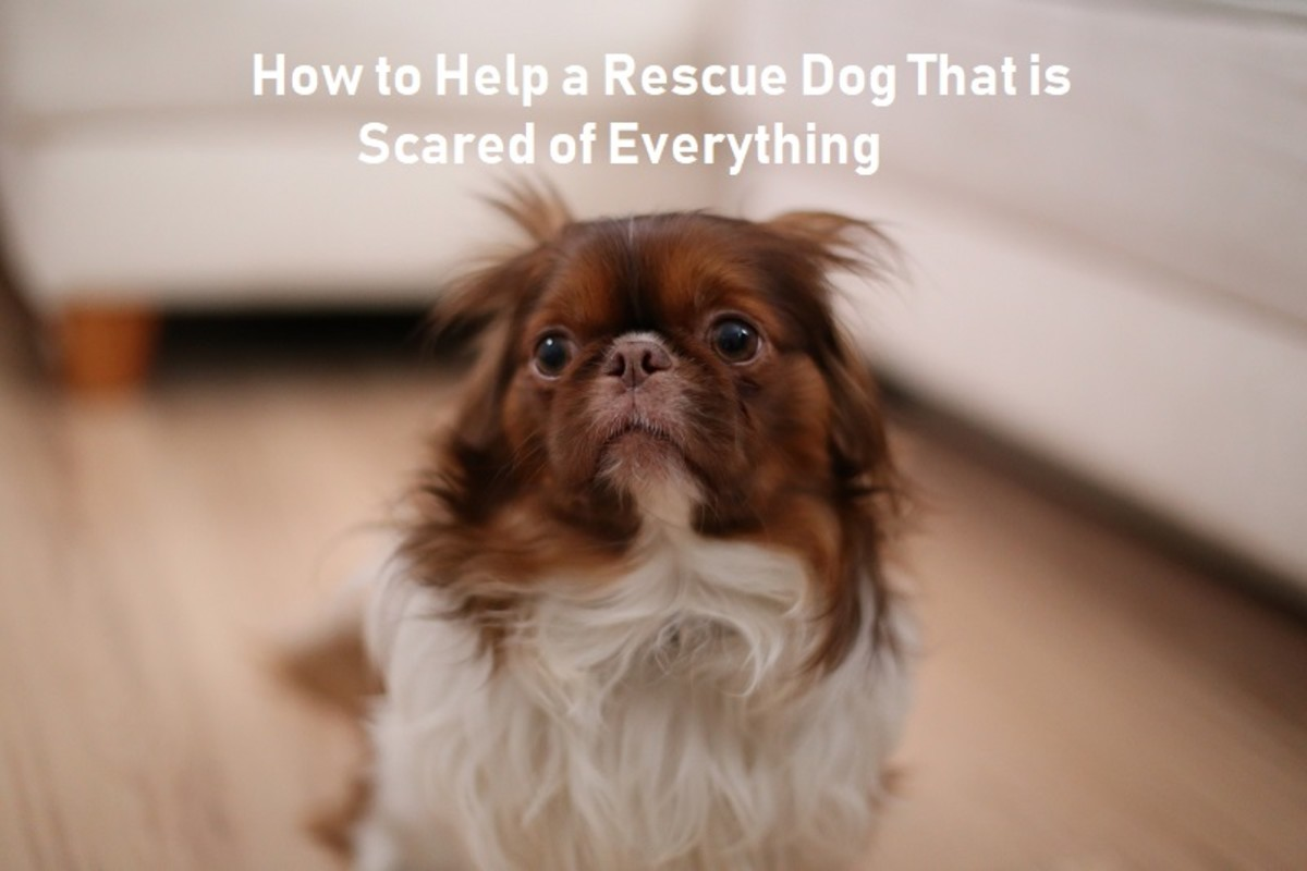 8 Ways to Help a Rescued Dog Scared of Everything