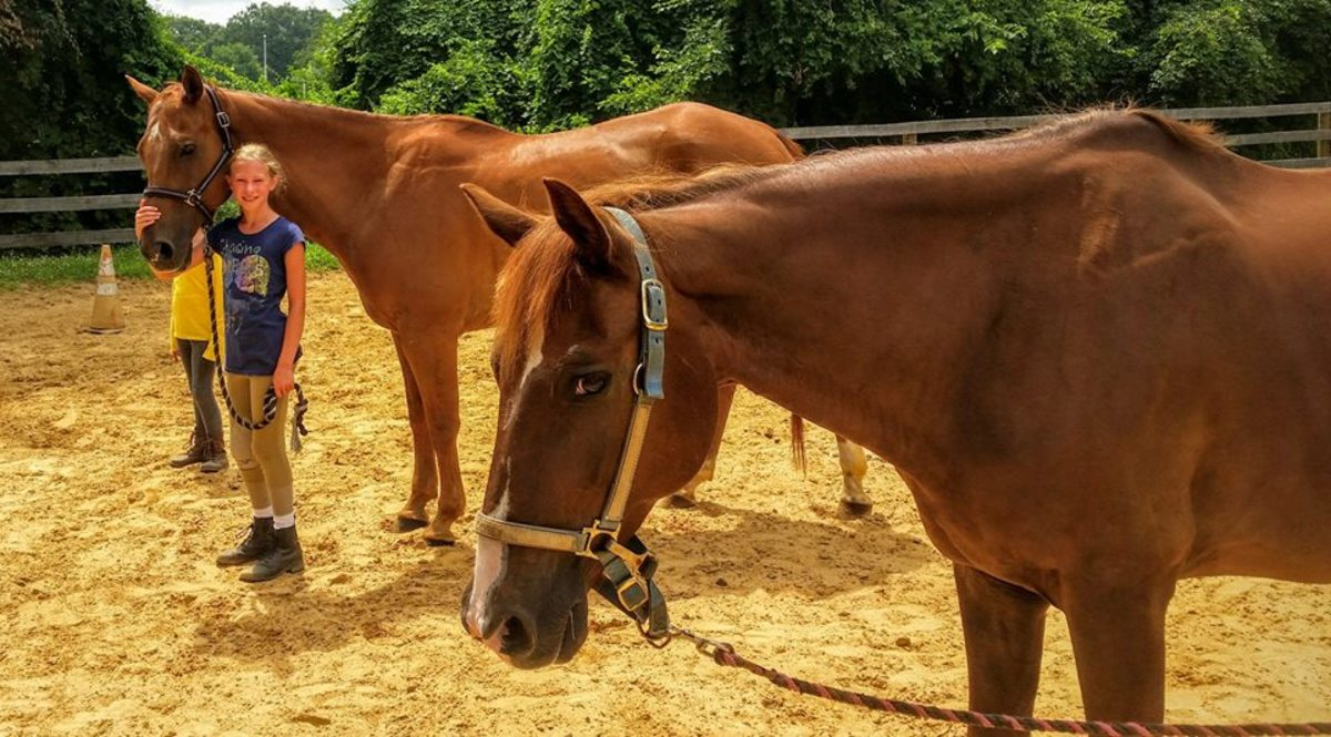 Frequently Asked Questions How To Lease A Horse Pethelpful