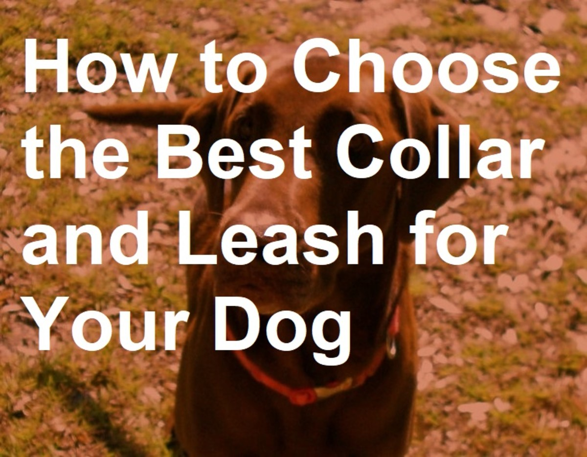 How to choose the best collar and leash for your dog