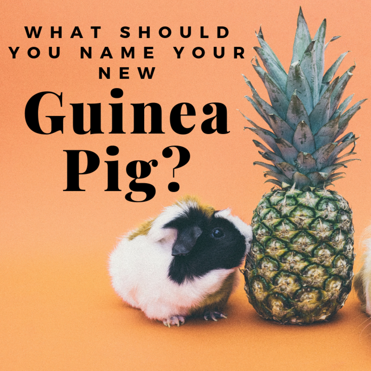 Guinea Pig Name Ideas